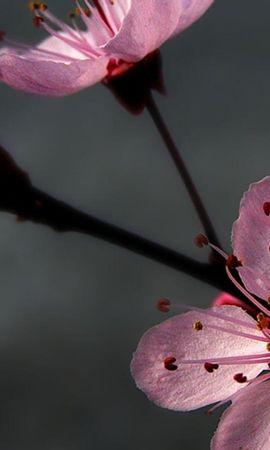 47000 baixar papel de parede Plantas, Flores - protetores de tela e imagens gratuitamente
