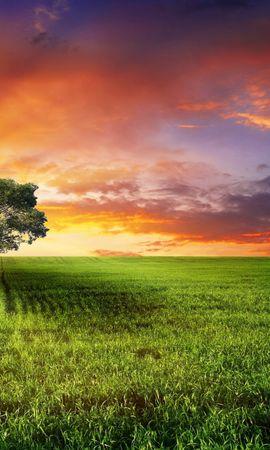 24729 скачать обои Пейзаж, Деревья, Закат, Поля, Солнце - заставки и картинки бесплатно