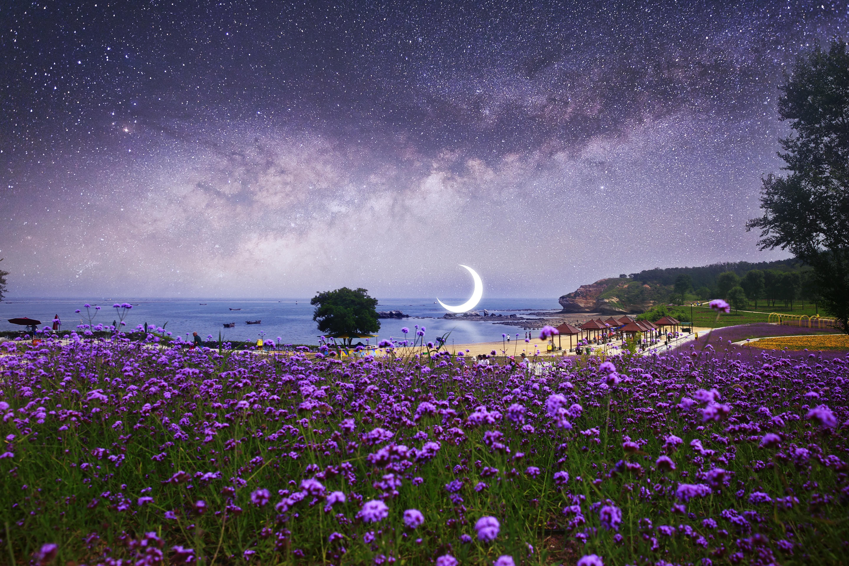 145400 скачать обои Природа, Луна, Звездное Небо, Фотошоп, Пляж, Млечный Путь, Цветы - заставки и картинки бесплатно