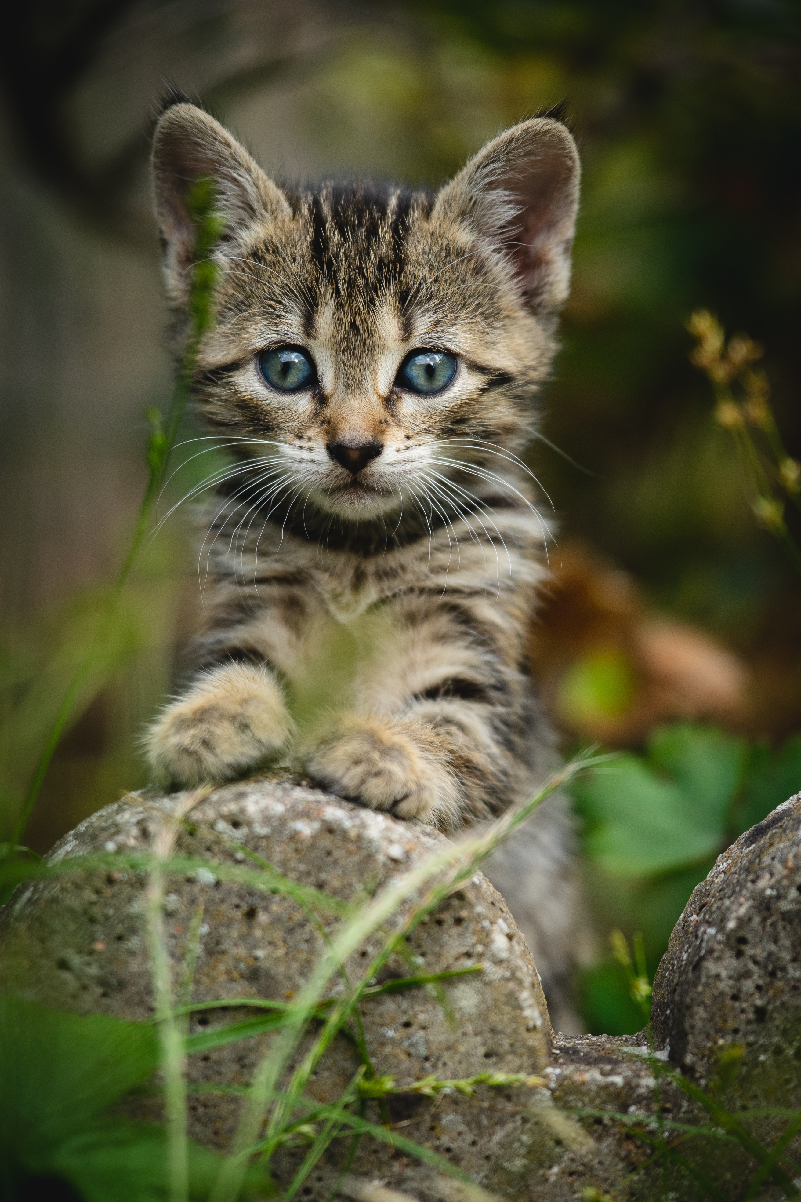 126460 download wallpaper Cat, Animals, Kitty, Kitten, Striped, Sight, Opinion, Nice, Sweetheart screensavers and pictures for free