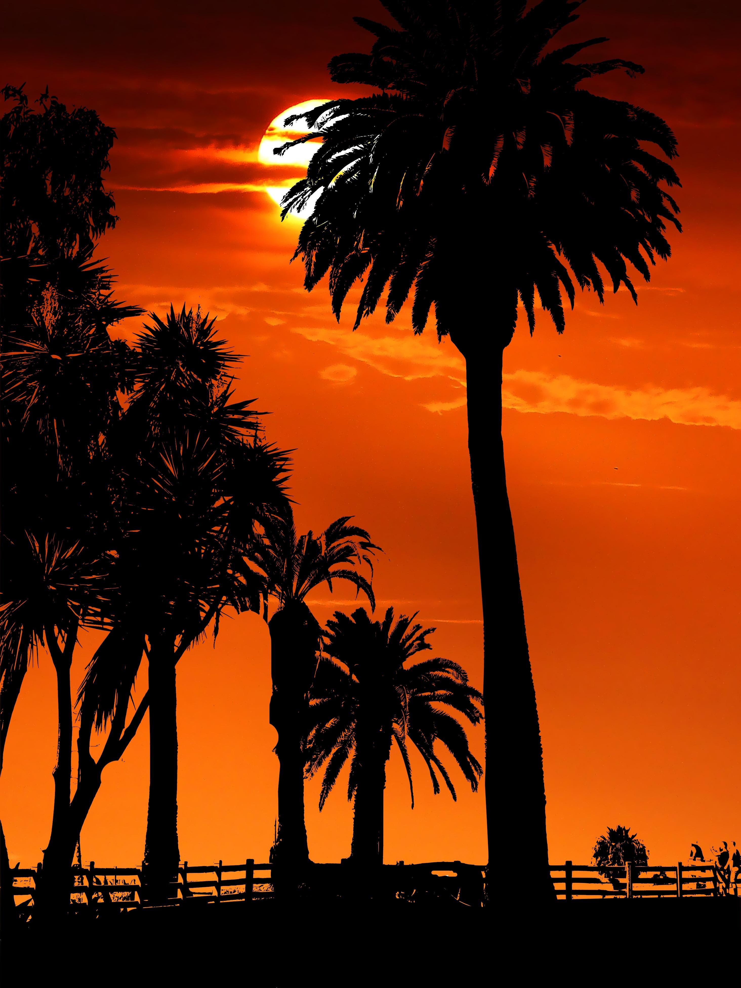 139962 скачать обои Темные, Закат, Ночь, Силуэты, Солнце, Пальмы - заставки и картинки бесплатно