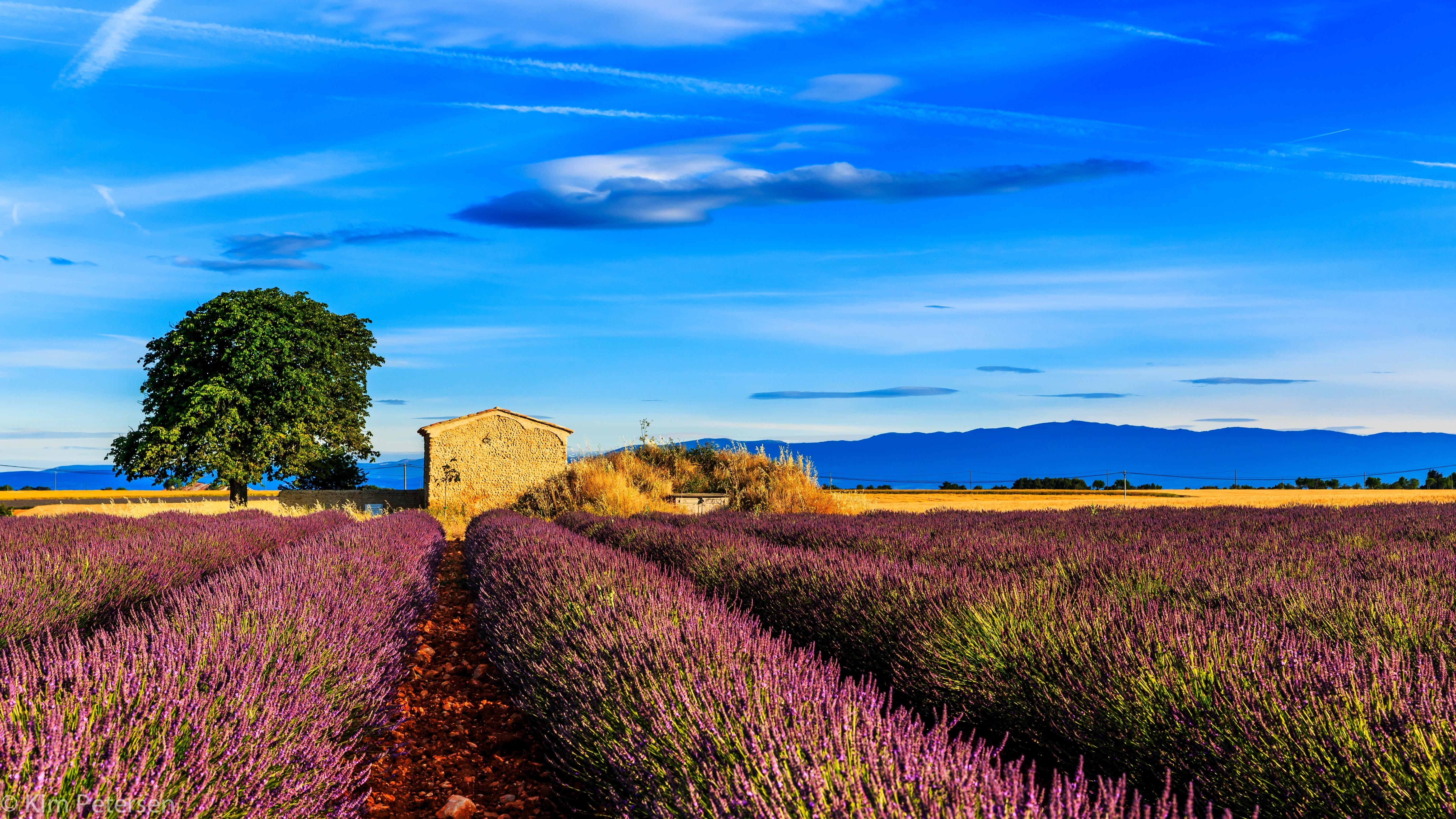 50468壁紙のダウンロード自然, フランス, プロヴァンス, フィールド, 畑, 草, スカイ-スクリーンセーバーと写真を無料で