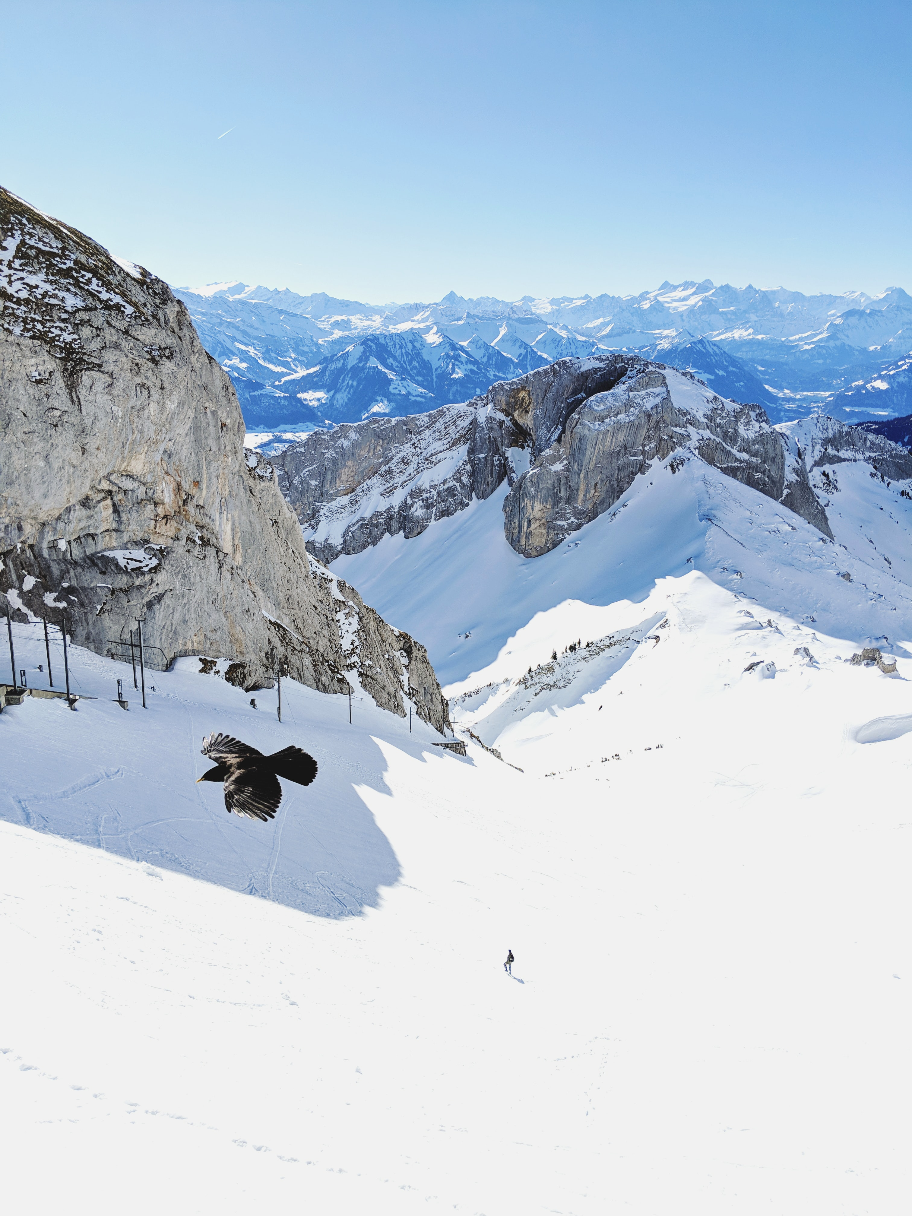 86631 download wallpaper Nature, Bird, Flight, Rocks, Snow, Snow Covered, Snowbound screensavers and pictures for free