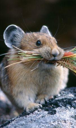 50033 baixar papel de parede Animais, Hamsters - protetores de tela e imagens gratuitamente