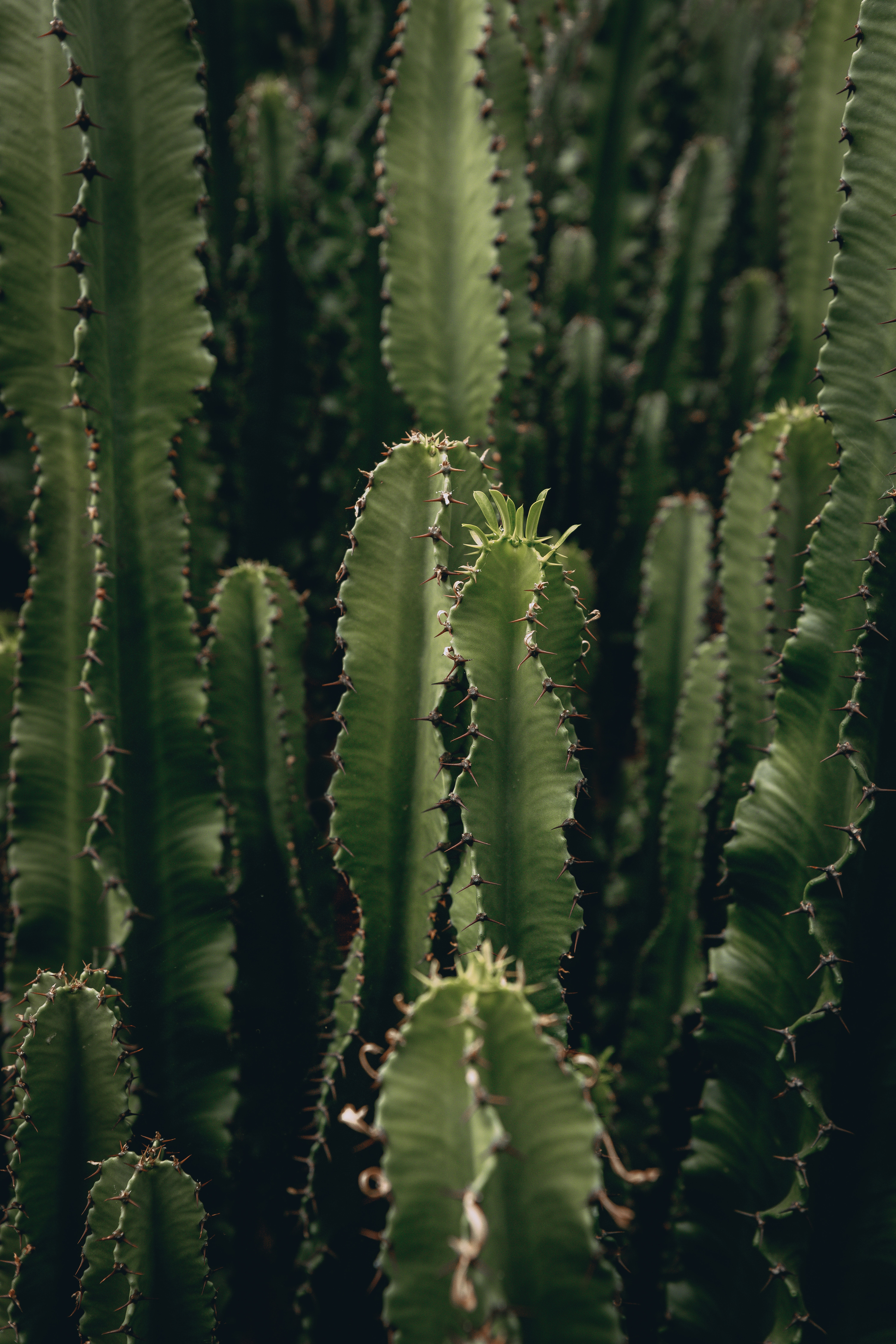 142061 download wallpaper Flowers, Plant, Barbed, Spiny, Cactus, Deserted screensavers and pictures for free
