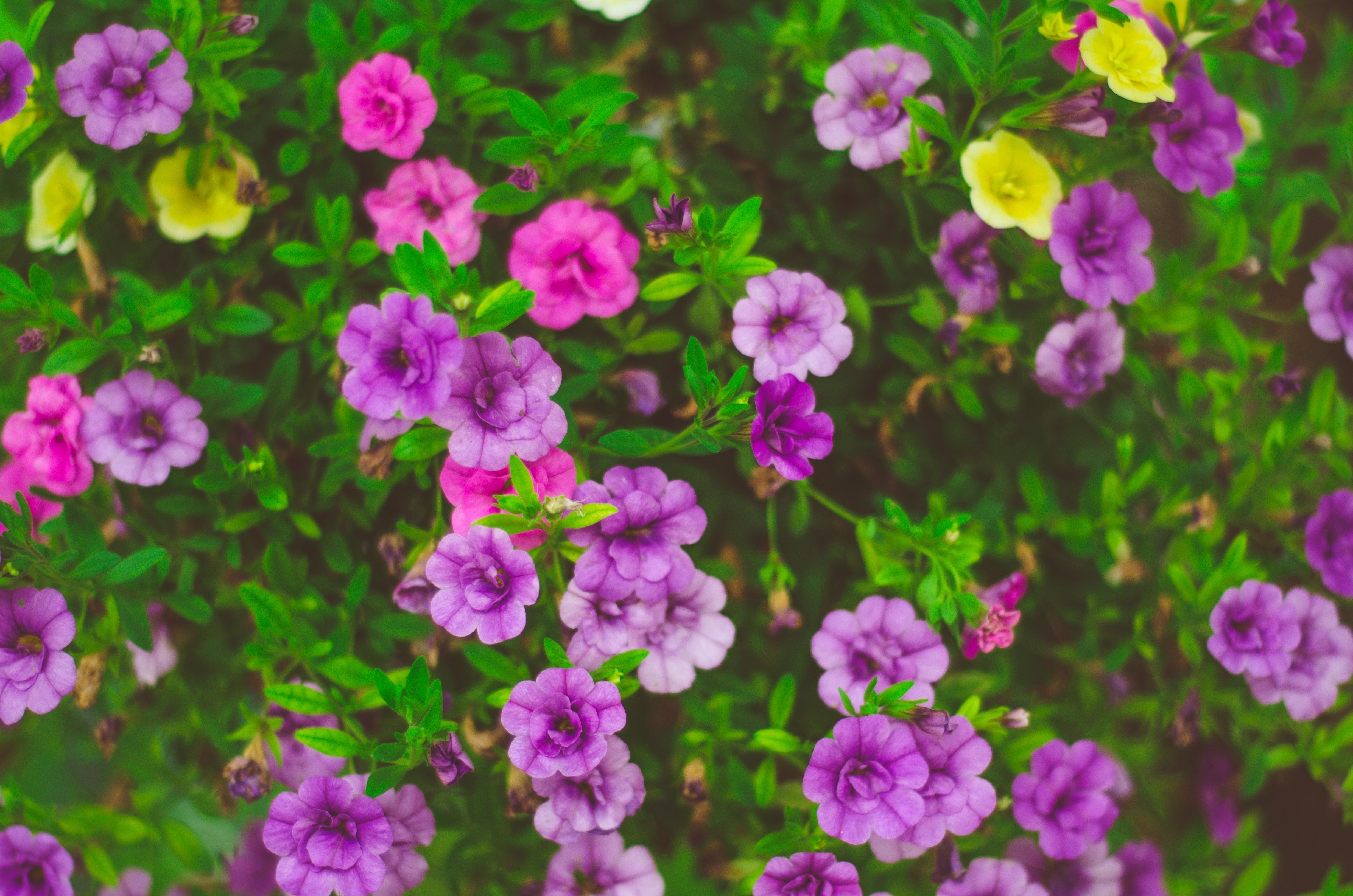 151802 скачать обои Цветы, Клумба, Растения - заставки и картинки бесплатно
