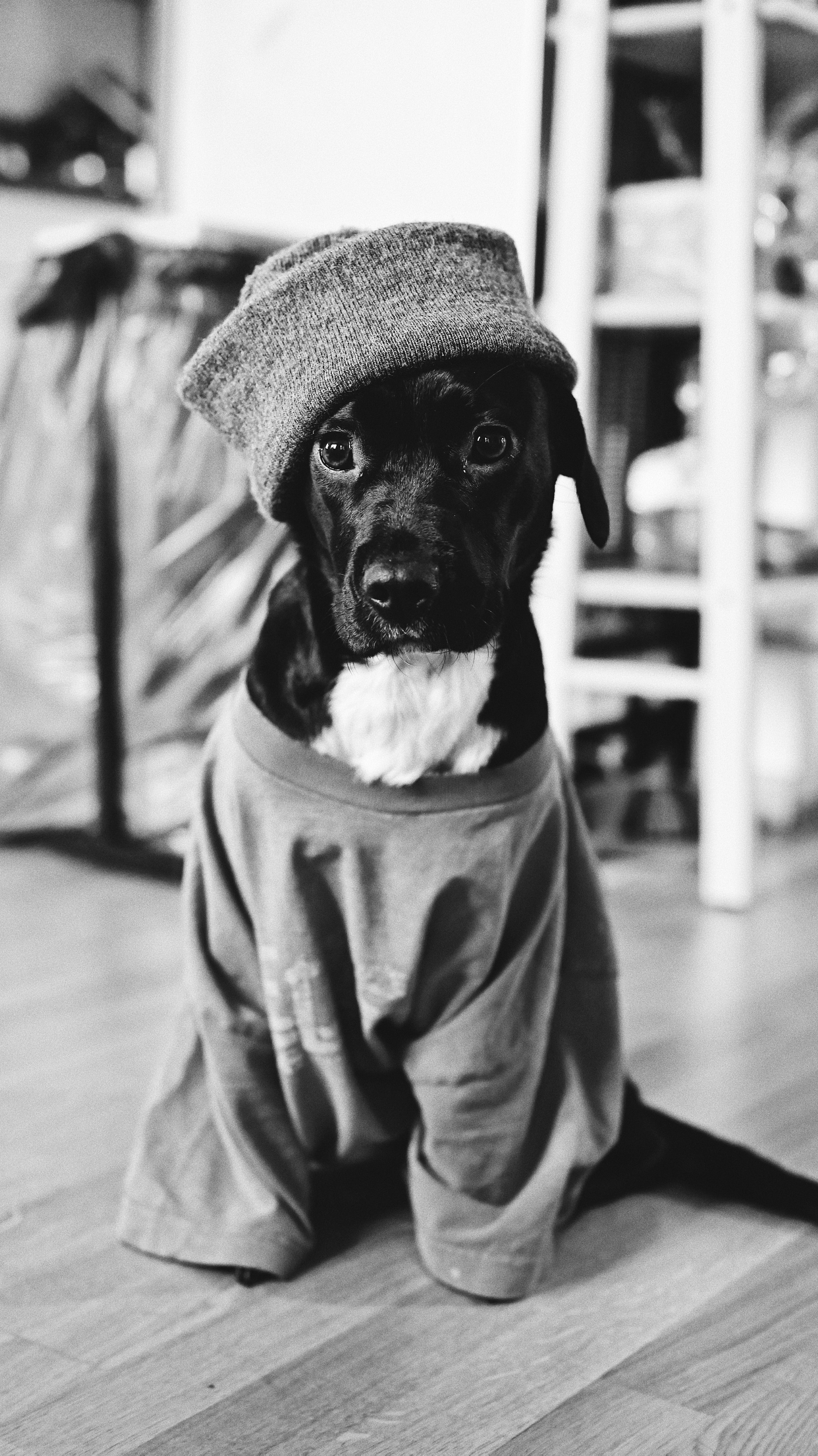 141791 Screensavers and Wallpapers Pet for phone. Download Animals, Dog, Clothing, Bw, Chb, Pet pictures for free