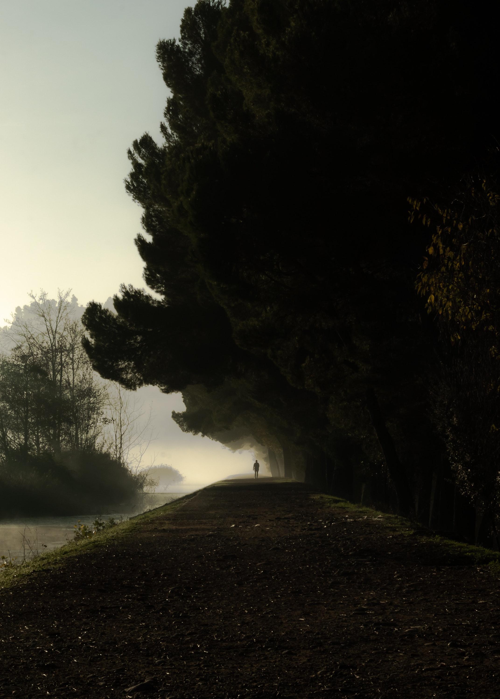118198 скачать обои Темный, Одиночество, Темные, Деревья, Силуэт, Туман, Темнота - заставки и картинки бесплатно