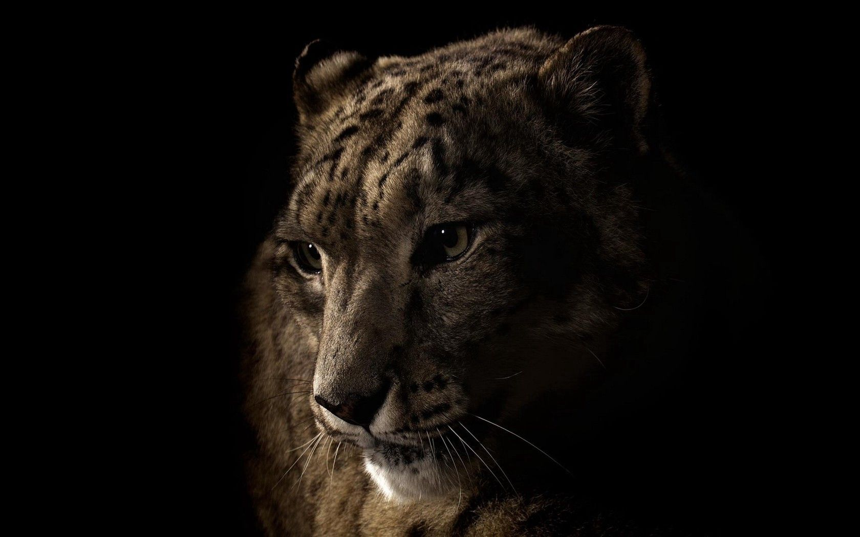 106105 download wallpaper Dark, Leopard, Muzzle, Shadow, Eyes screensavers and pictures for free