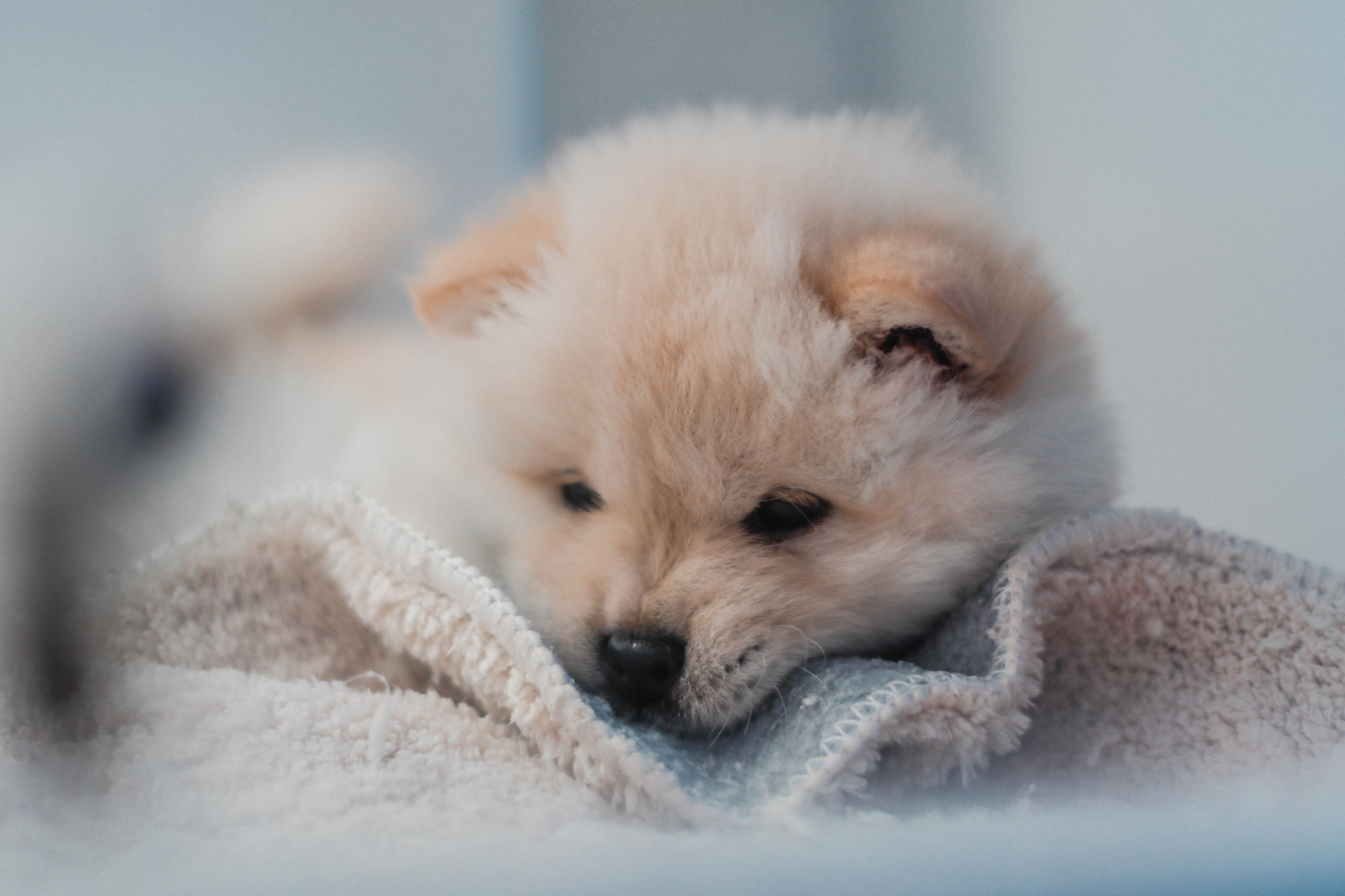 104256 Screensavers and Wallpapers Puppy for phone. Download Animals, Fluffy, Dog, Nice, Sweetheart, Puppy pictures for free