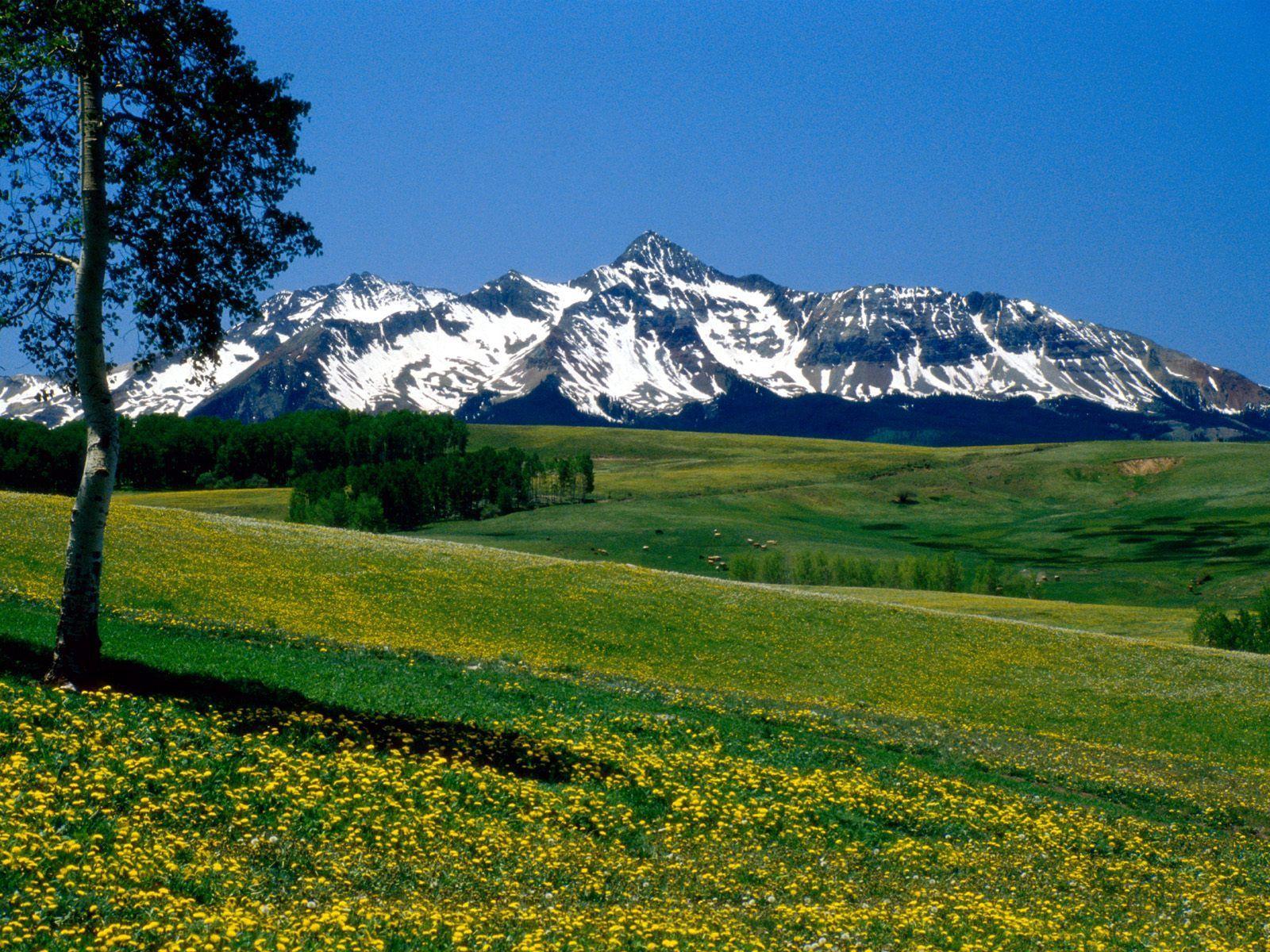 134198 télécharger le fond d'écran Bois, Nature, Fleurs, Herbe, Montagnes, Arbre, Prairies, Colorado - économiseurs d'écran et images gratuitement
