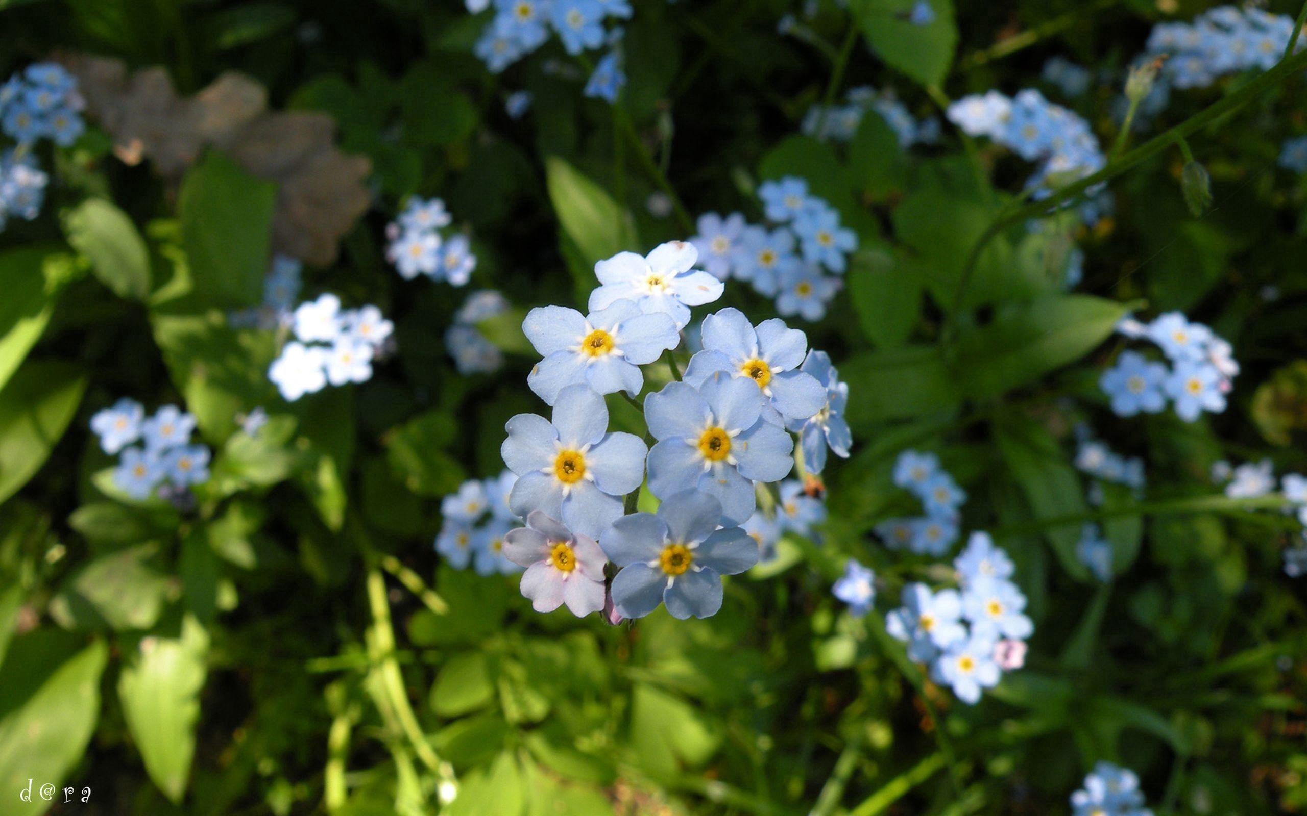 64861 Salvapantallas y fondos de pantalla Flores en tu teléfono. Descarga imágenes de Macro, Pequeña, Pequeño, Hierba, Planta, Flores gratis