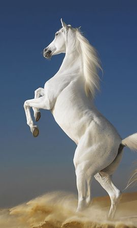6728 download wallpaper Animals, Horses screensavers and pictures for free