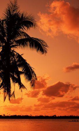 20773 скачать обои Пейзаж, Закат, Море, Пальмы - заставки и картинки бесплатно