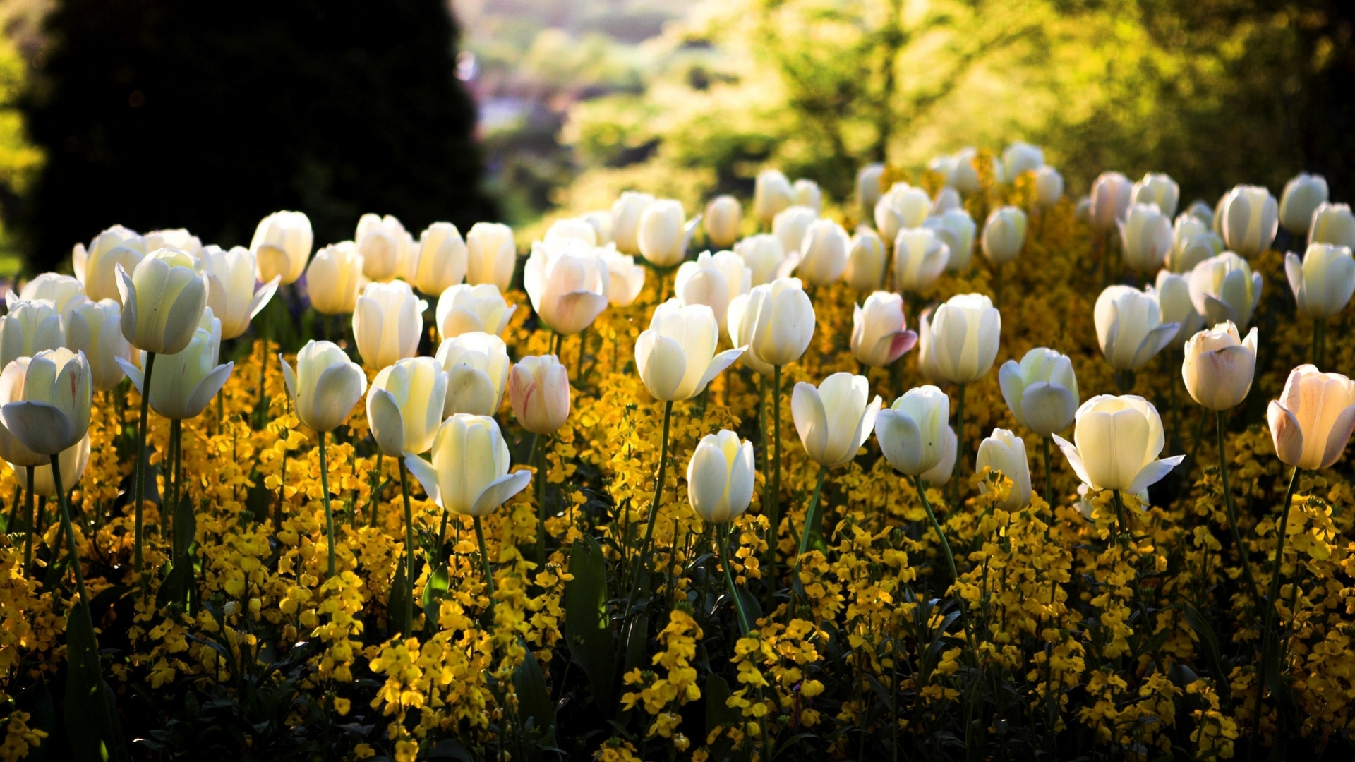 44136 скачать обои Растения, Пейзаж, Цветы - заставки и картинки бесплатно