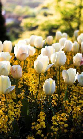 44136 télécharger le fond d'écran Plantes, Paysage, Fleurs - économiseurs d'écran et images gratuitement