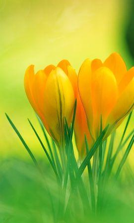 45796 скачать обои Растения, Цветы - заставки и картинки бесплатно