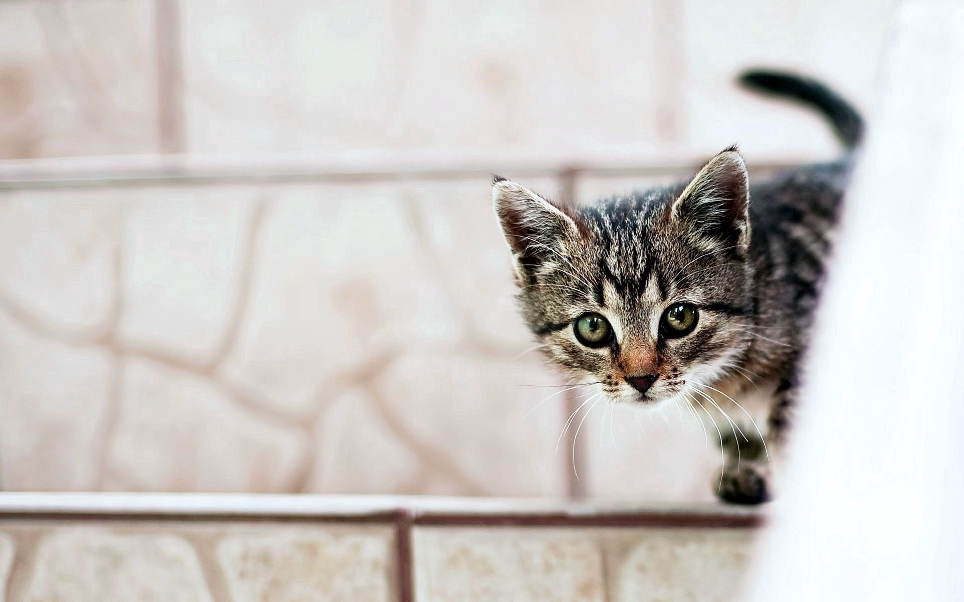 135570 download wallpaper Animals, Kitty, Kitten, Muzzle, Peek Out, Look Out screensavers and pictures for free
