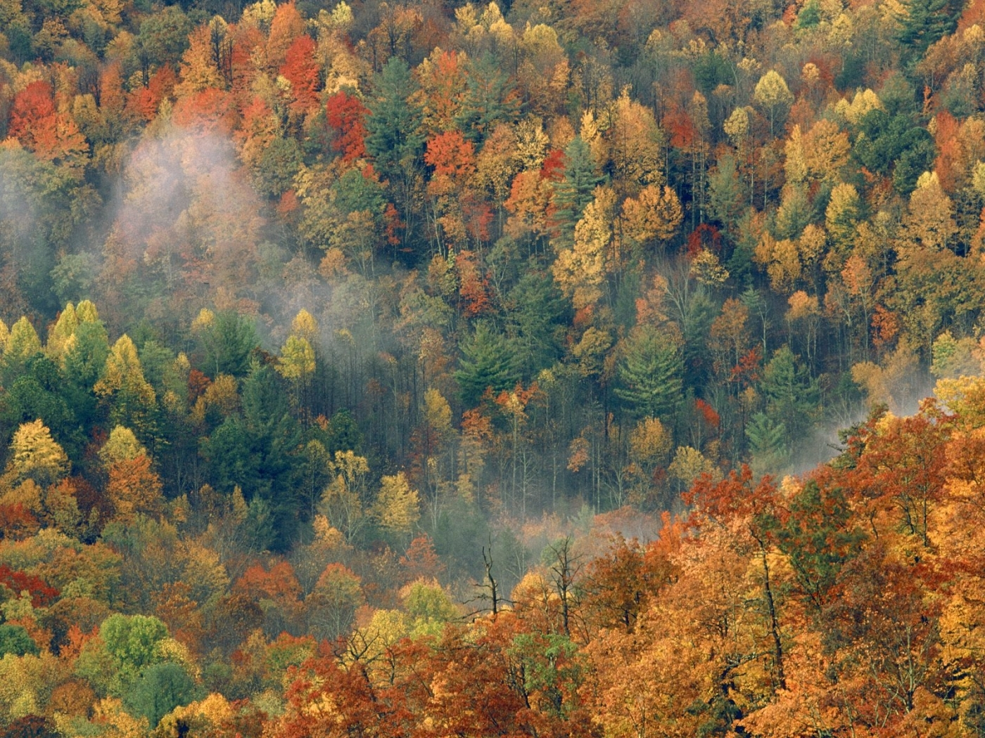 31636 download wallpaper Landscape, Trees, Autumn screensavers and pictures for free