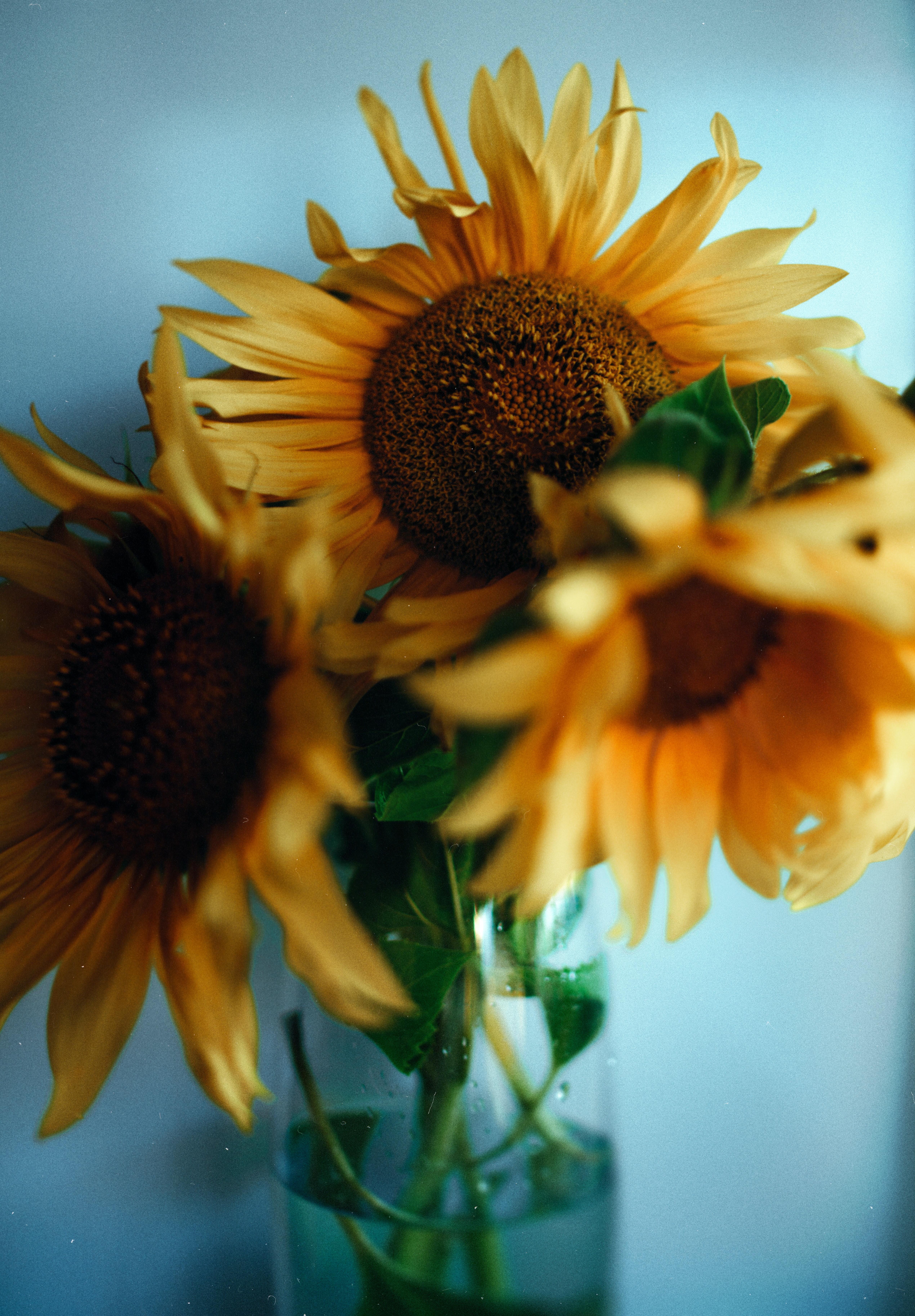 116520 Заставки и Обои Подсолнухи на телефон. Скачать Цветы, Букет, Ваза, Желтый, Подсолнухи картинки бесплатно