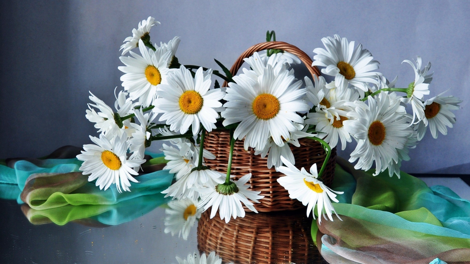 41549 download wallpaper Plants, Flowers, Camomile screensavers and pictures for free