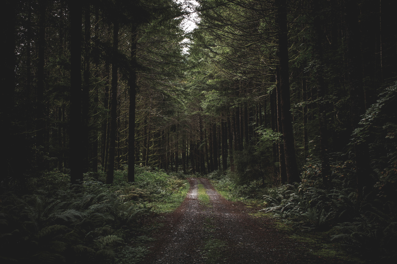 101794 скачать обои Лес, Вечер, Природа, Деревья, Трава, Тропинка - заставки и картинки бесплатно
