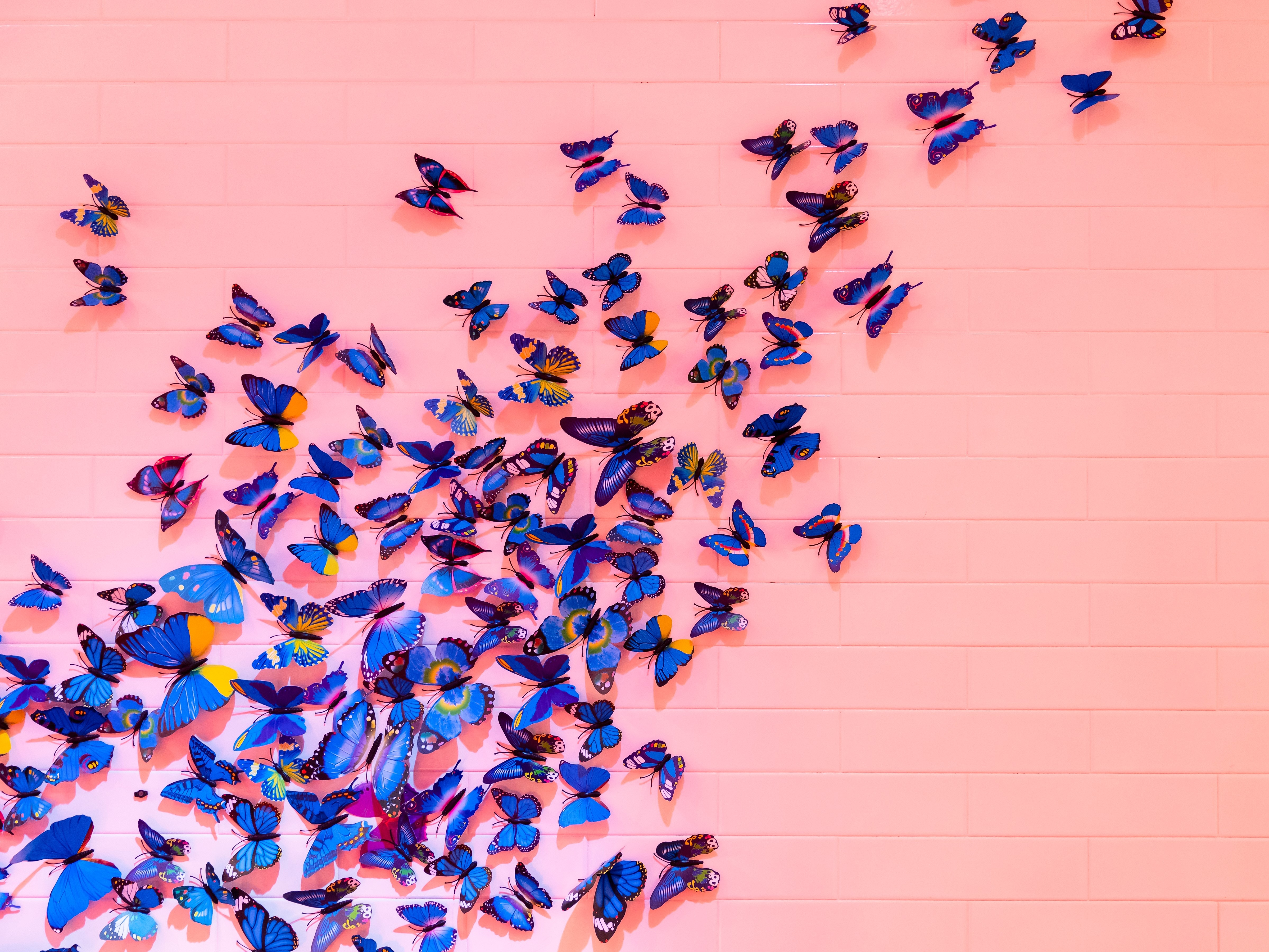 106899 download wallpaper Butterflies, Miscellanea, Miscellaneous, Registration, Typography, Wall, Decoration screensavers and pictures for free