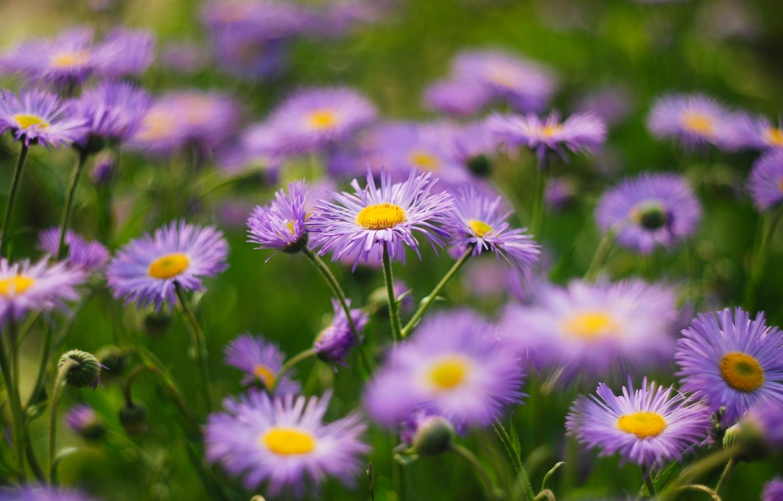 26123 скачать обои Растения, Цветы - заставки и картинки бесплатно