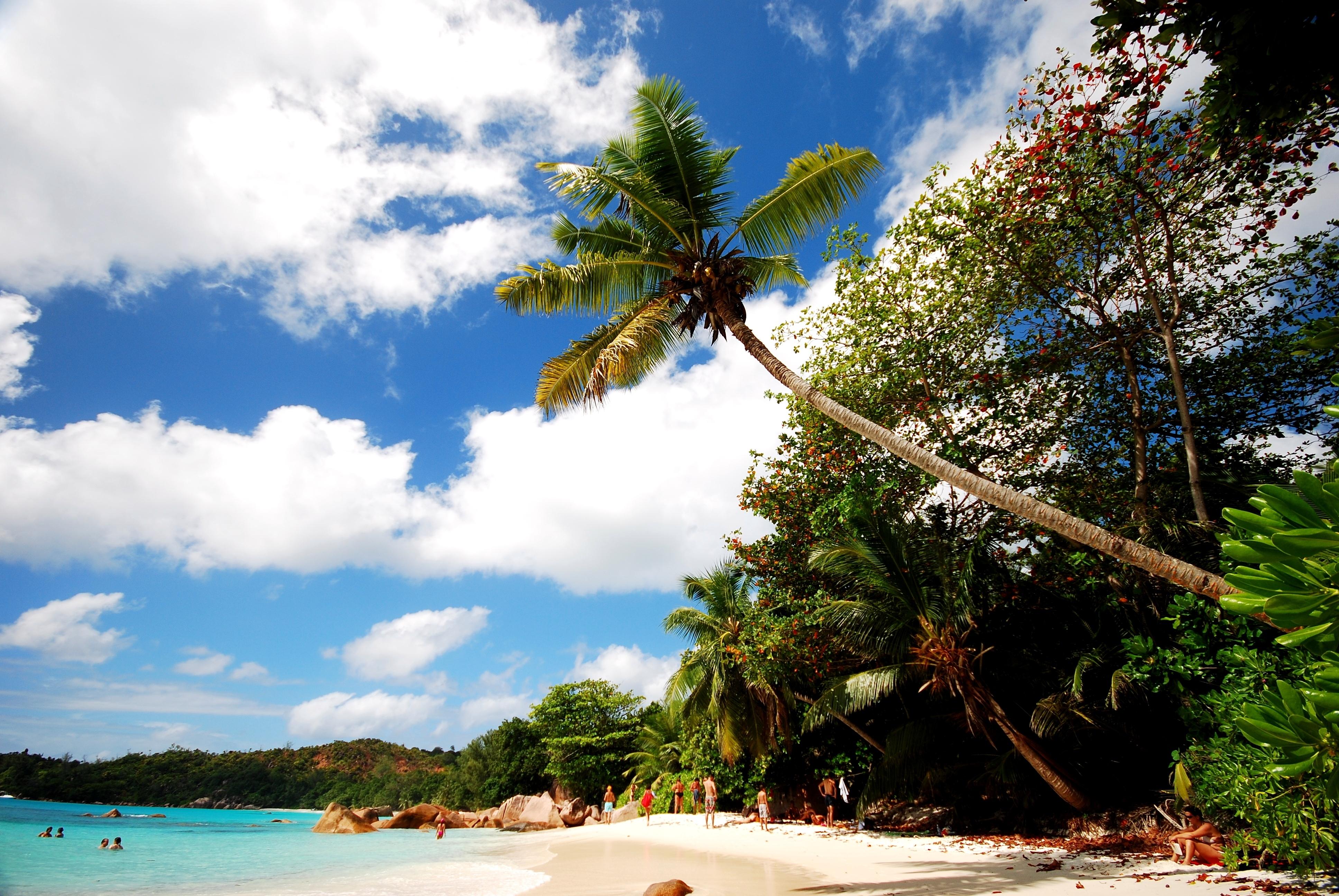 95462 免費下載壁紙 性质, 海滩, 沙, 支撑, 海岸, 棕榈 屏保和圖片