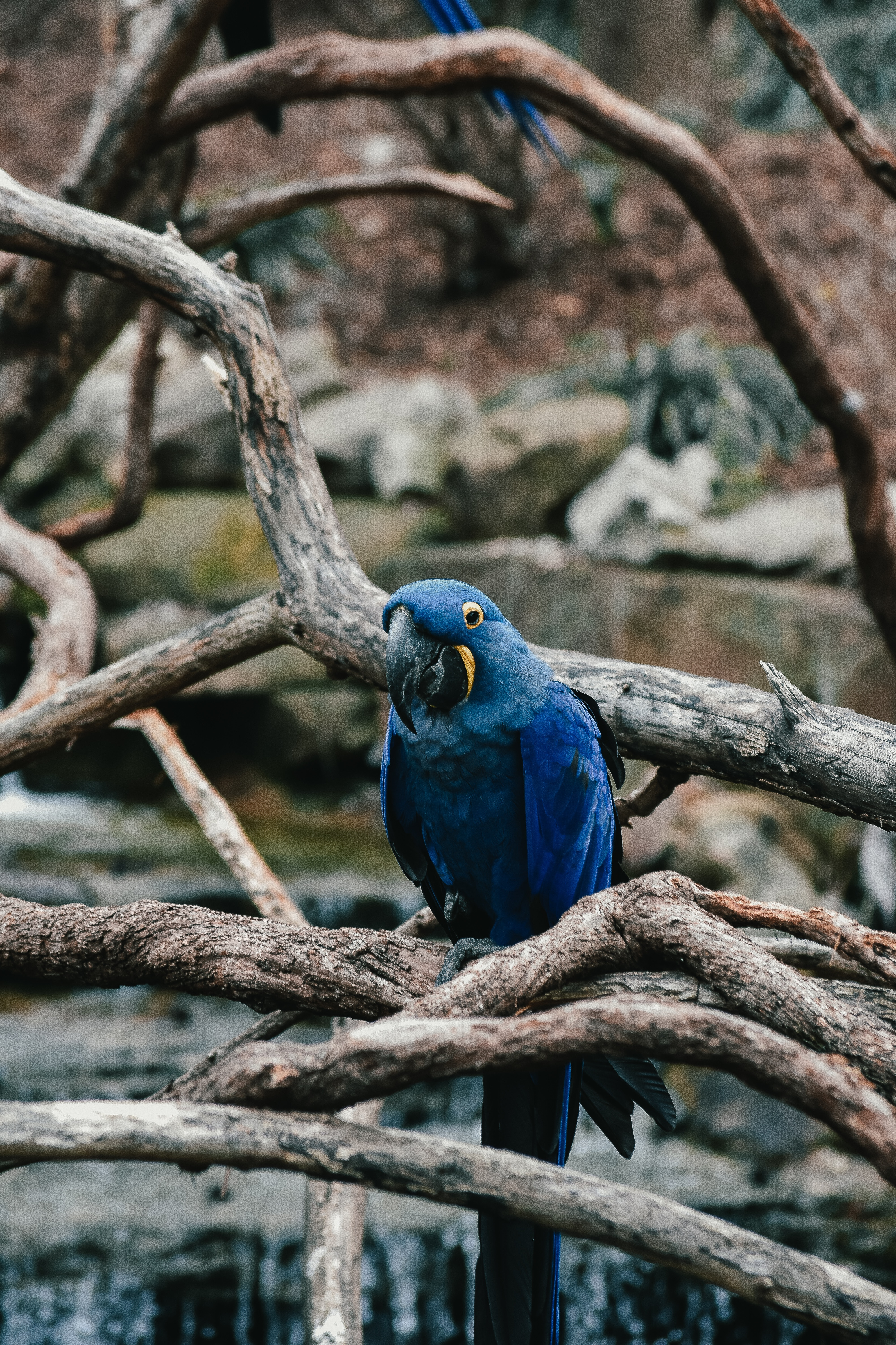117637 download wallpaper Animals, Parrots, Bird screensavers and pictures for free