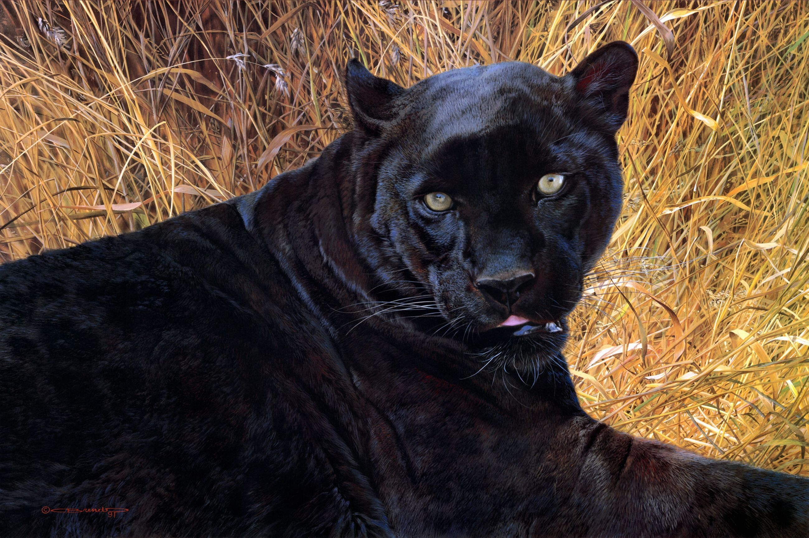 85013 скачать обои Животные, Пантера, Трава, Морда, Оскал, Агрессия - заставки и картинки бесплатно