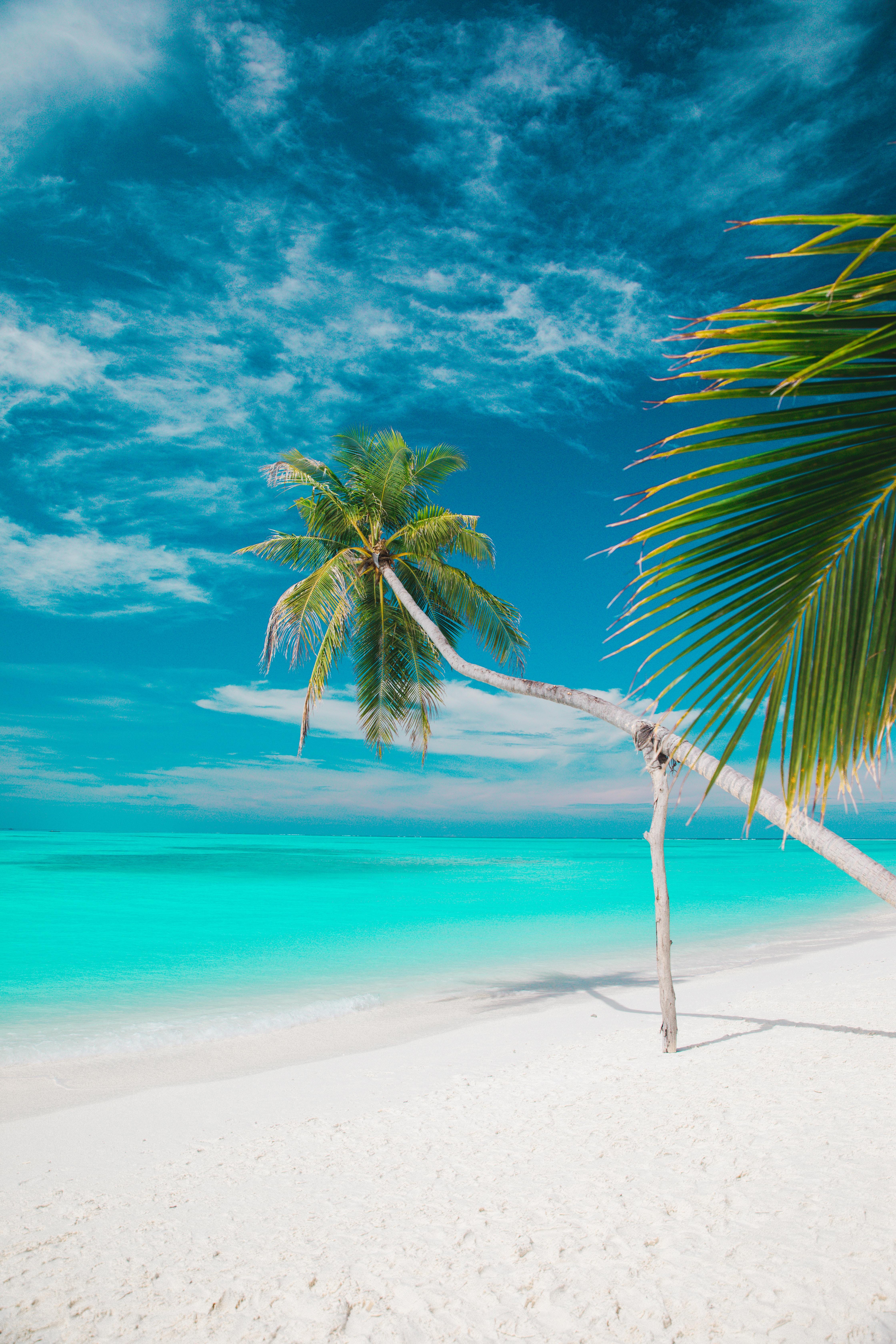 125039 скачать обои Природа, Море, Пляж, Пальмы, Лето, Тропики - заставки и картинки бесплатно