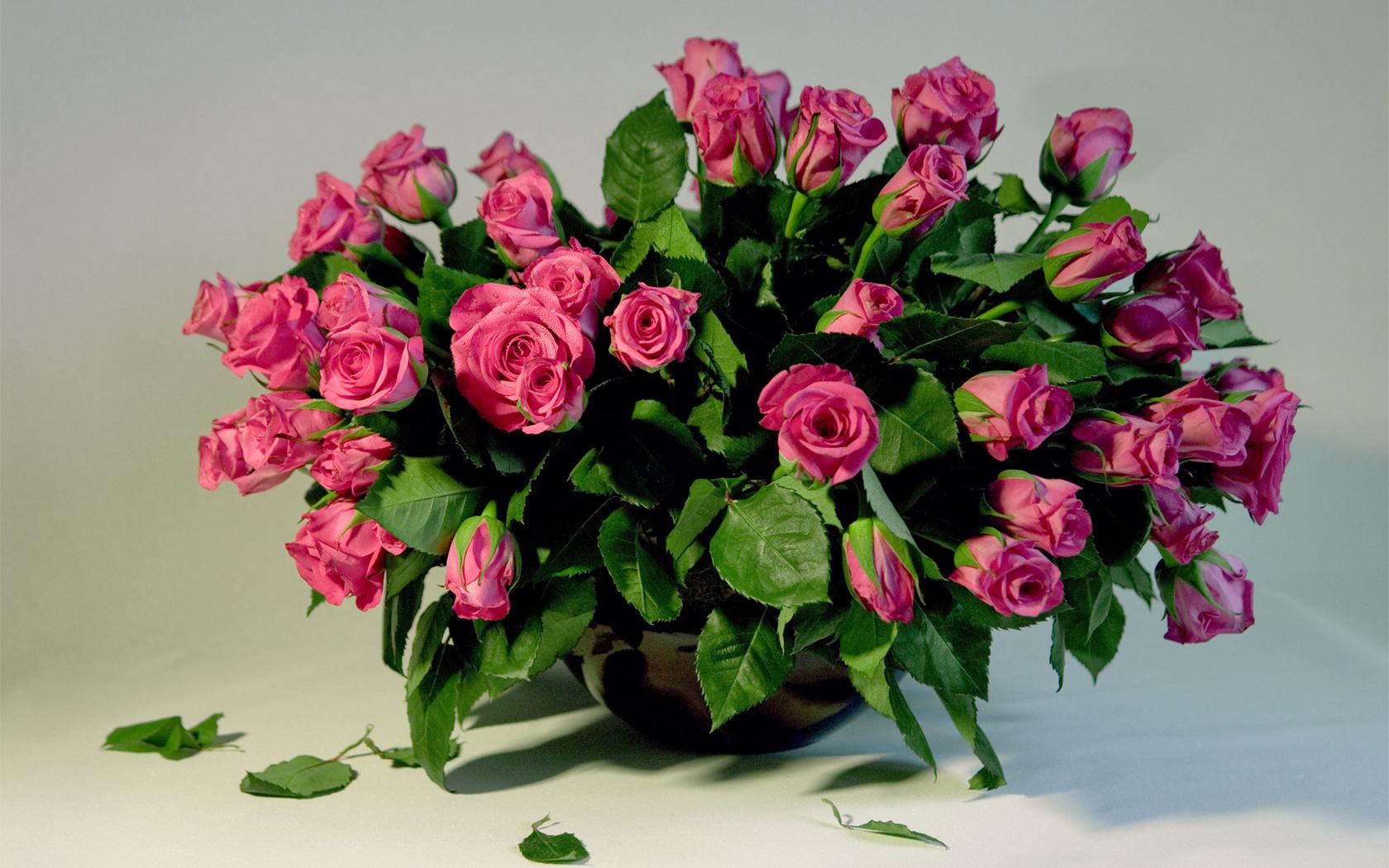 23291 télécharger le fond d'écran Plantes, Fleurs, Roses, Bouquets - économiseurs d'écran et images gratuitement