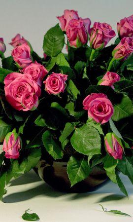 23291 descargar fondo de pantalla Plantas, Flores, Roses, Bouquets: protectores de pantalla e imágenes gratis