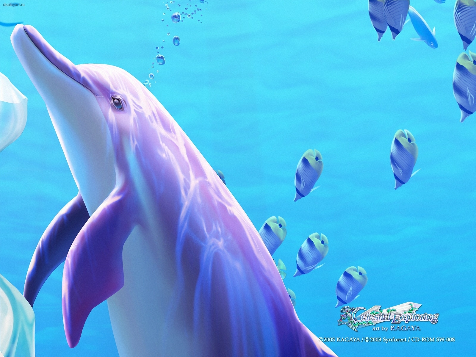 4456 download wallpaper Animals, Water, Dolfins, Sea, Pictures screensavers and pictures for free