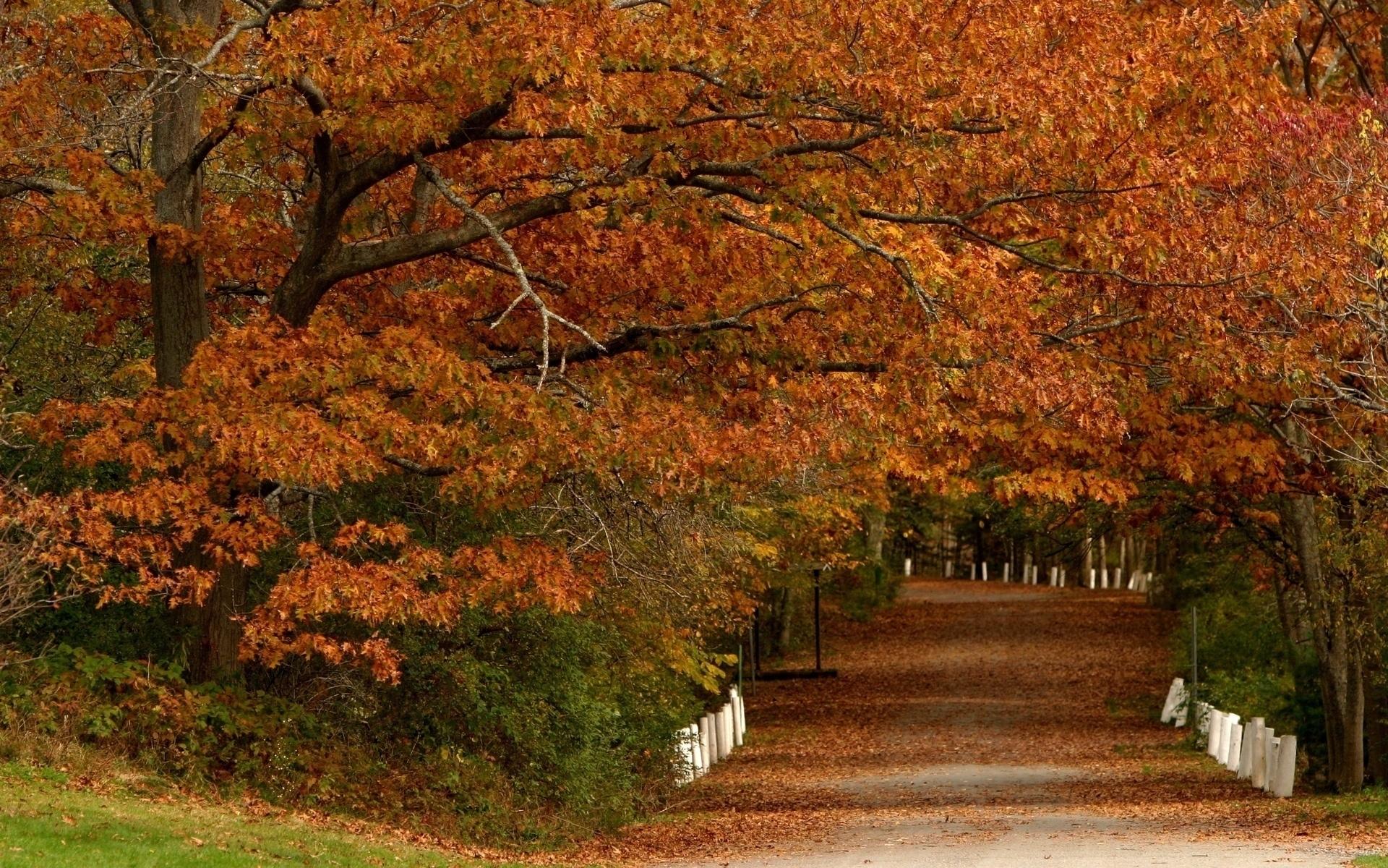 46076 скачать обои Пейзаж, Деревья, Осень, Листья - заставки и картинки бесплатно