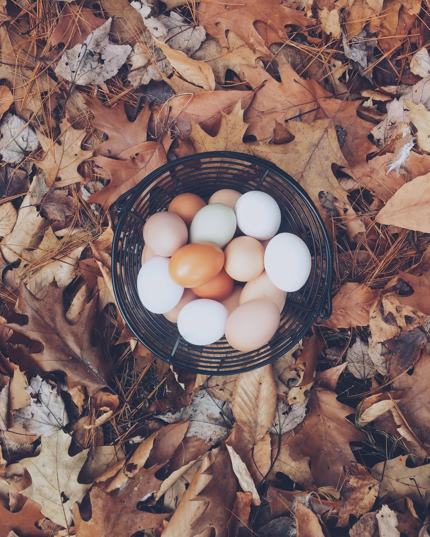 146266 Заставки и Обои Яйца на телефон. Скачать Еда, Осень, Яйца, Листва, Корзинка картинки бесплатно