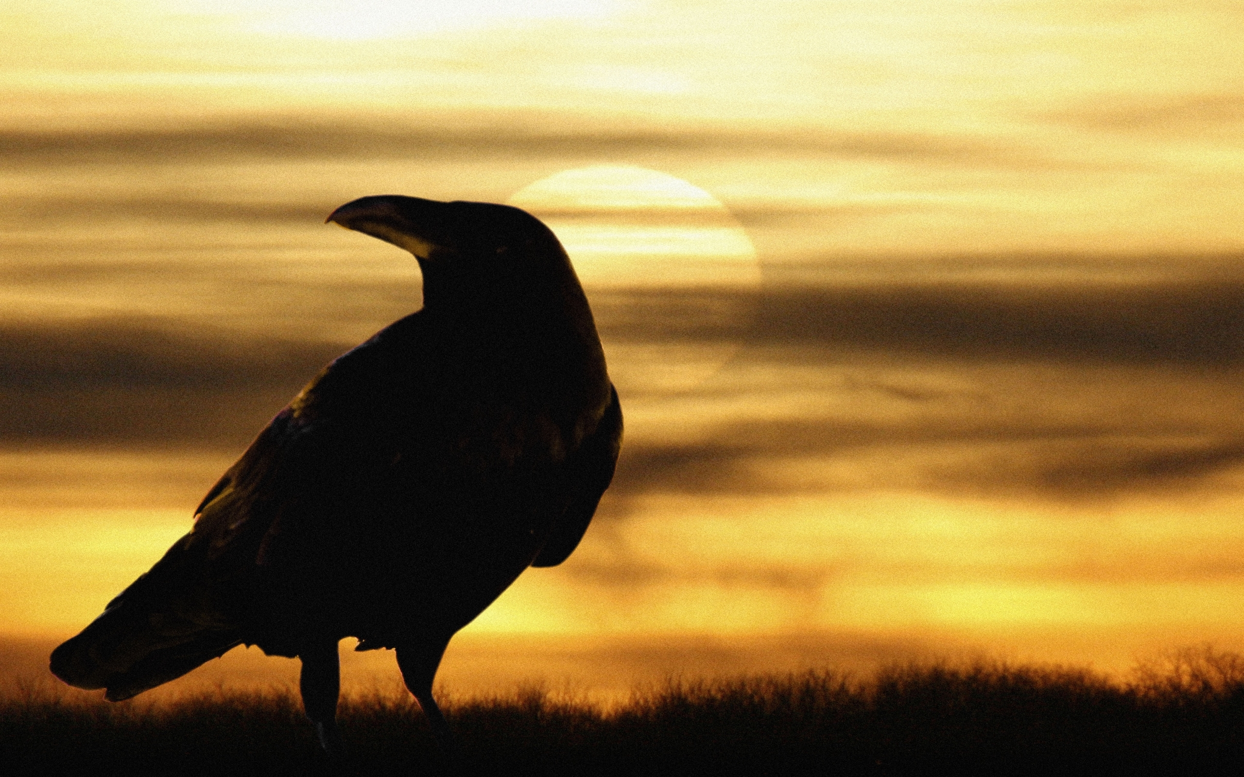 2900 download wallpaper Animals, Birds, Crows screensavers and pictures for free
