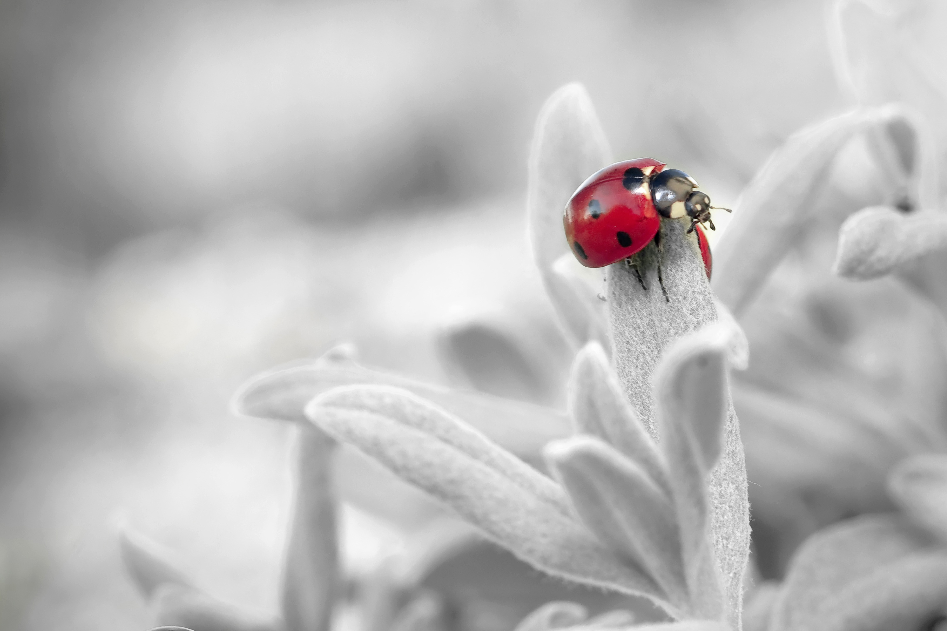 122788 Screensavers and Wallpapers Petals for phone. Download Flower, Macro, Petals, Insect, Ladybug, Ladybird pictures for free