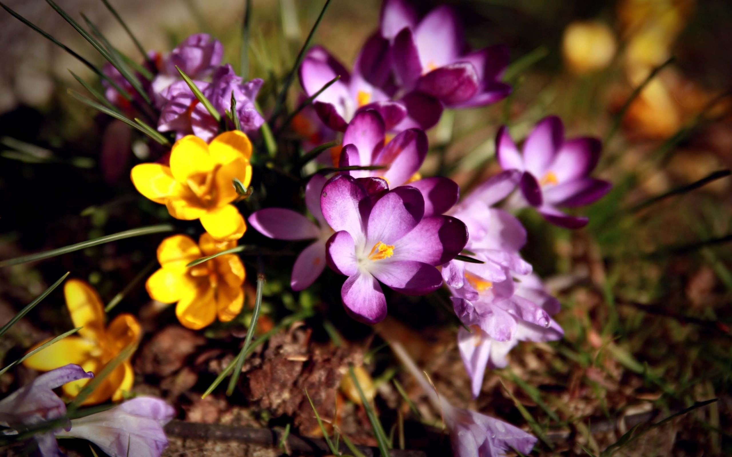 44587 скачать обои Растения, Цветы - заставки и картинки бесплатно
