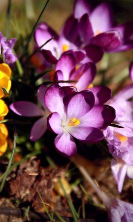 44587 télécharger le fond d'écran Plantes, Fleurs - économiseurs d'écran et images gratuitement