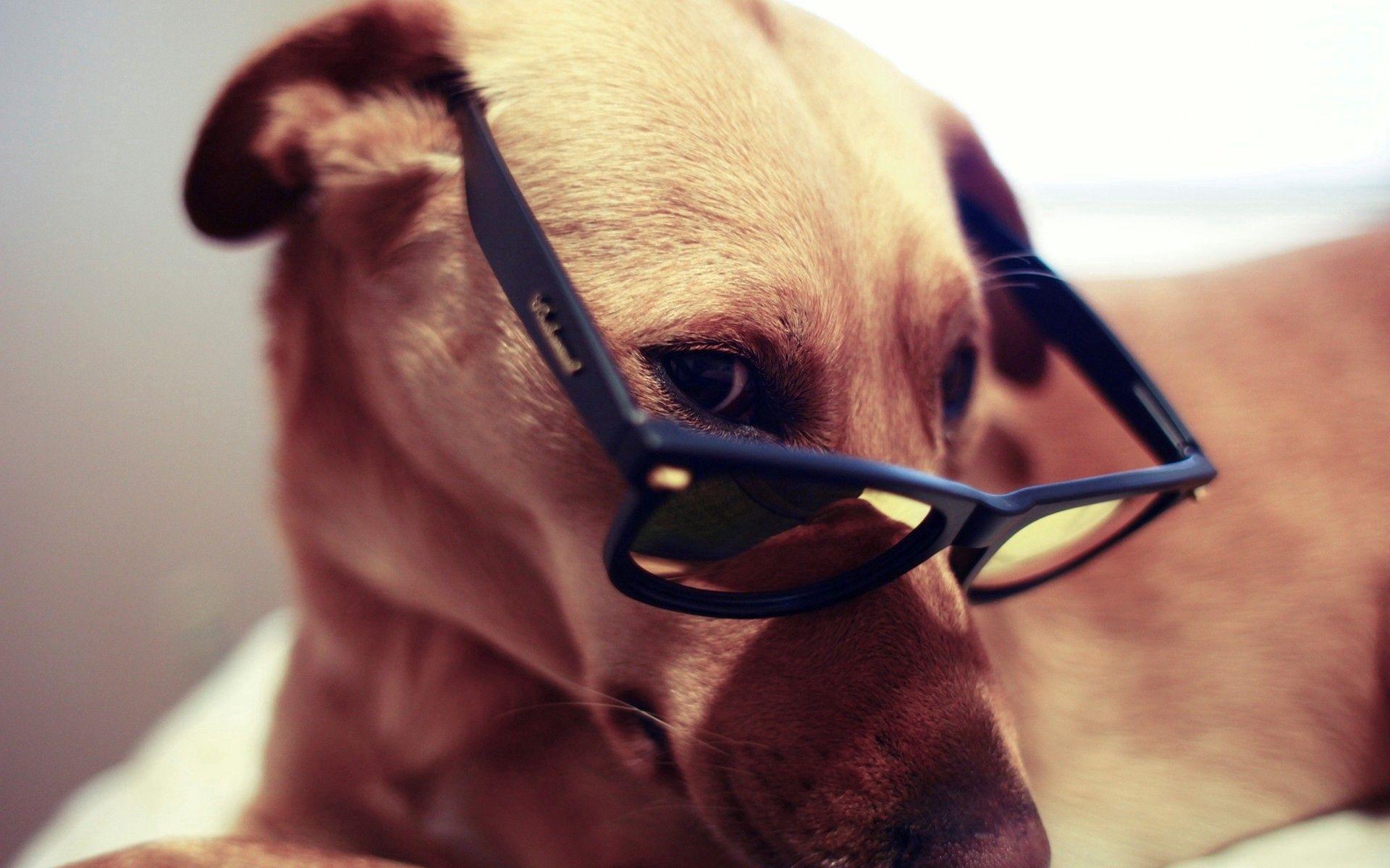 132161 скачать обои Животные, Собака, Морда, Глаза, Очки - заставки и картинки бесплатно
