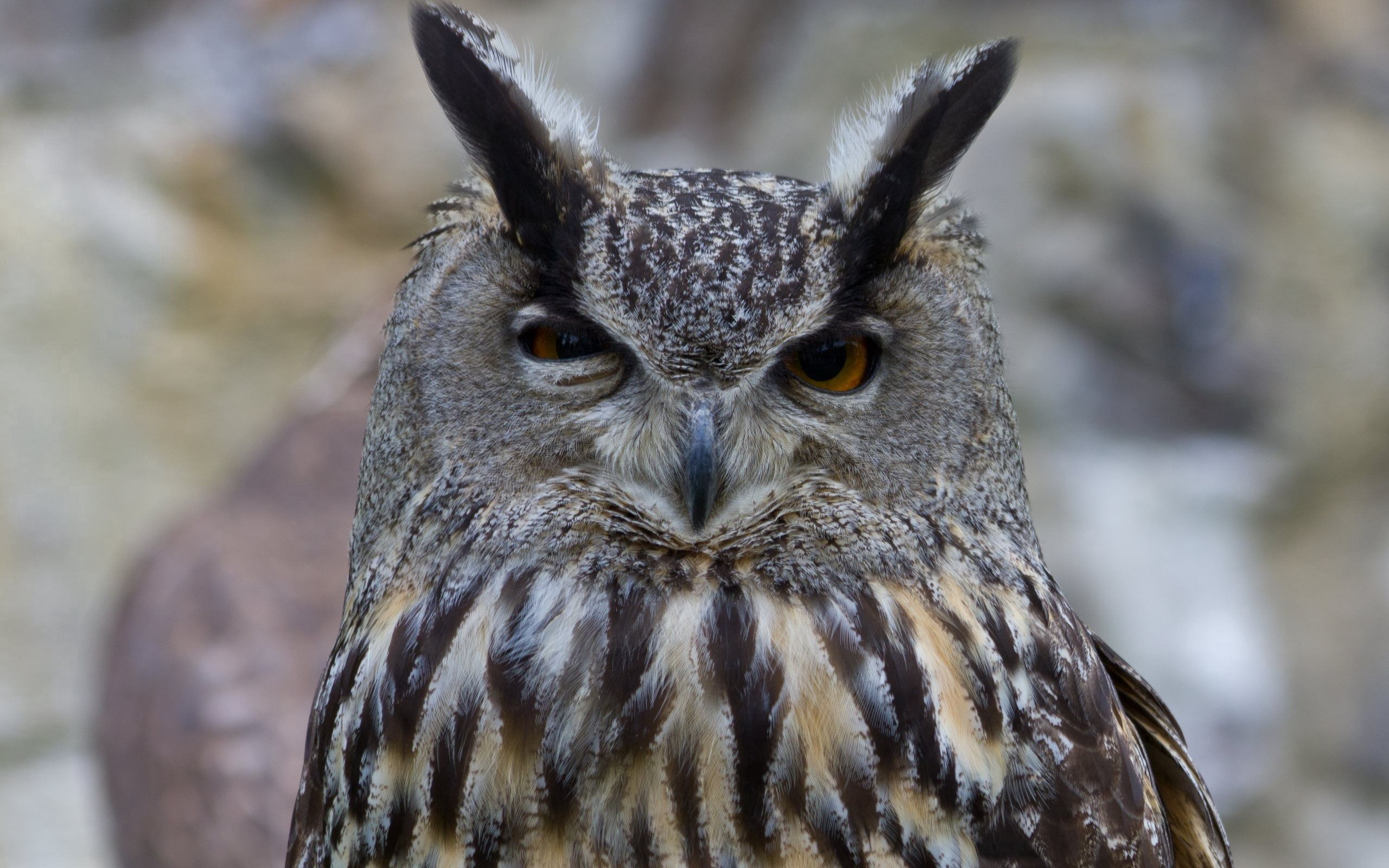 56378 Screensavers and Wallpapers Eyes for phone. Download Animals, Owl, Bird, Eyes, Predator pictures for free