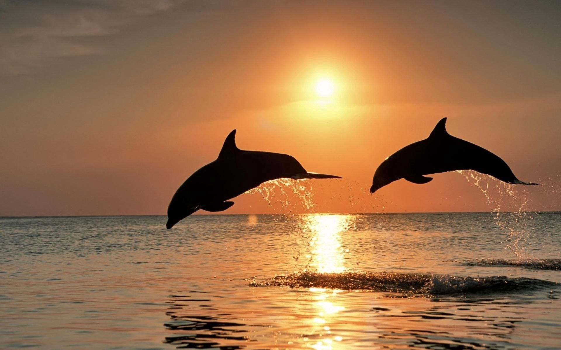 138016 download wallpaper Animals, Sunset, Dolfins, Sea, Couple, Pair, Bounce, Jump screensavers and pictures for free