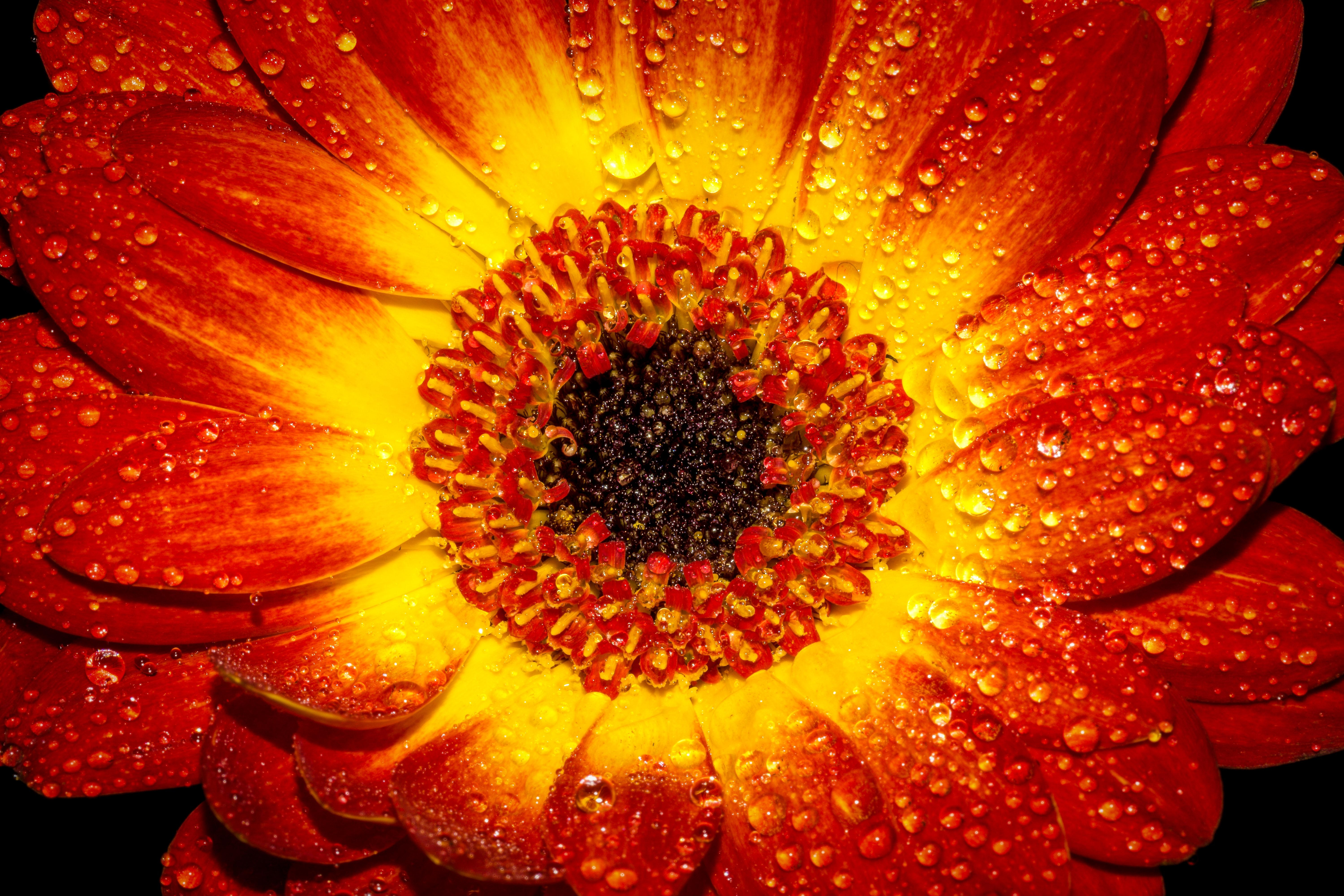 74690 Screensavers and Wallpapers Drops for phone. Download Drops, Flower, Macro, Petal pictures for free