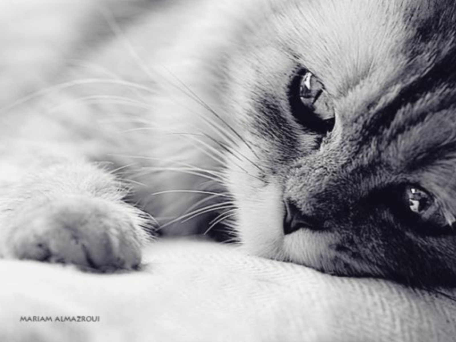 4030 download wallpaper Animals, Cats screensavers and pictures for free
