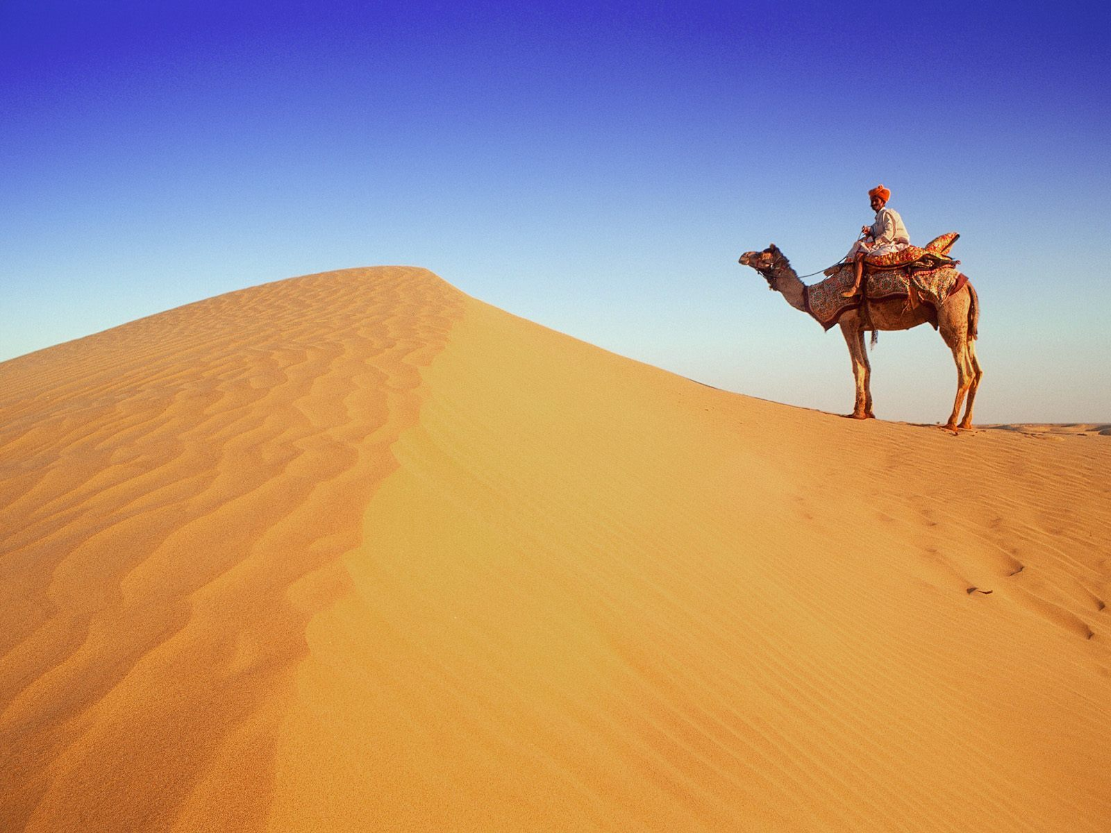 12065 download wallpaper Animals, Landscape, Sand, Desert, Camels screensavers and pictures for free