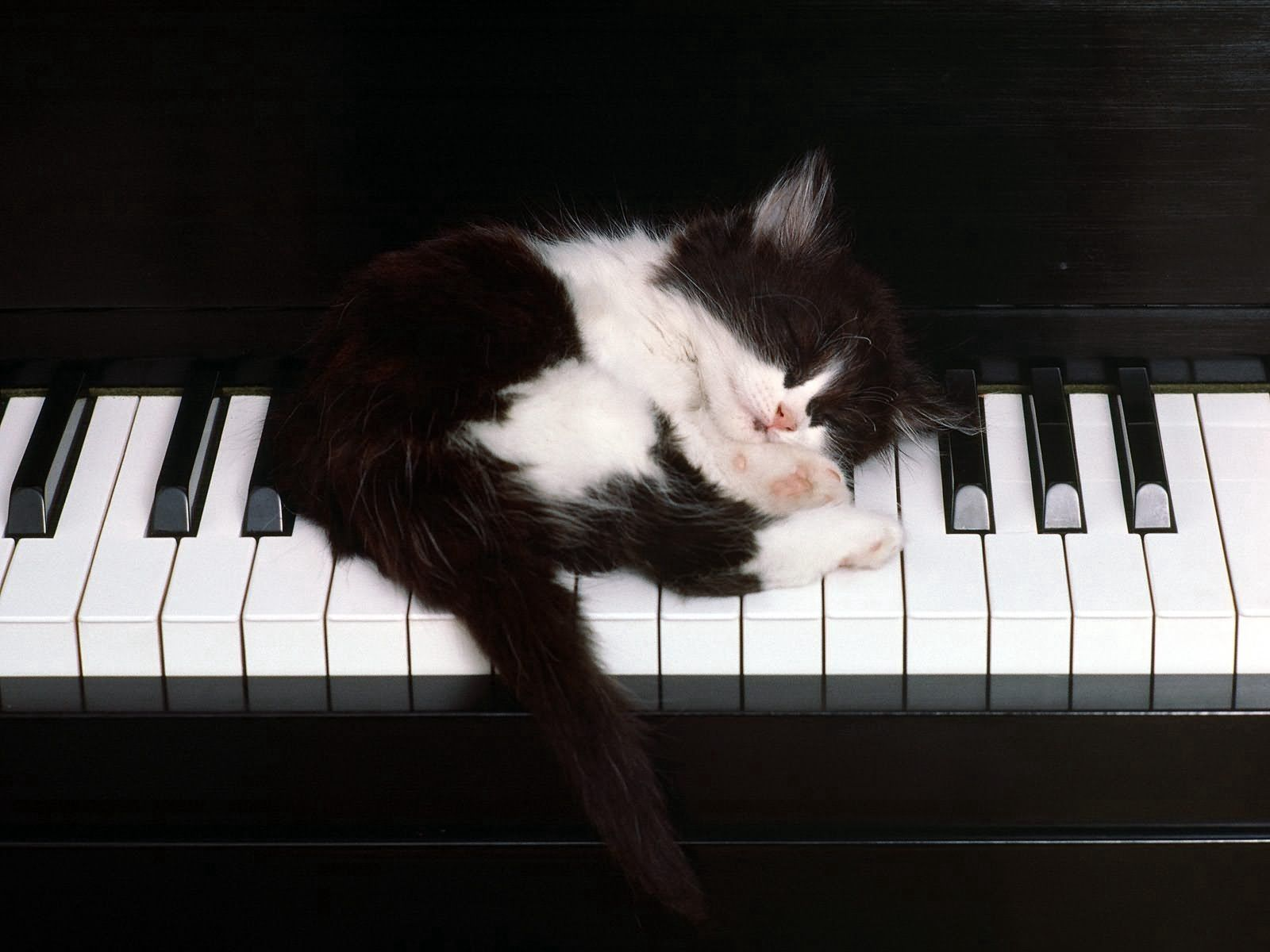 85918 Screensavers and Wallpapers Kitten for phone. Download Animals, Piano, Kitty, Kitten, Sleep, Dream pictures for free