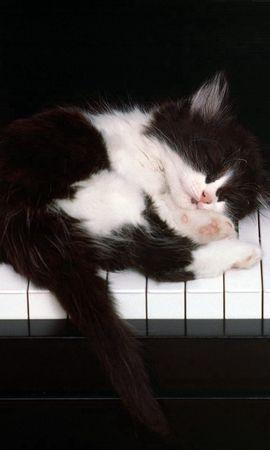 85918壁紙のダウンロード動物, キティ, 子猫, 睡眠, 夢, ピアノ-スクリーンセーバーと写真を無料で