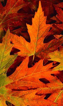 13717 скачать обои Растения, Фон, Осень, Листья - заставки и картинки бесплатно